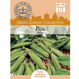 pea avola first early  kew collection seeds