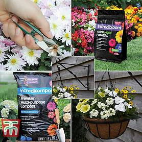 petunia success kit