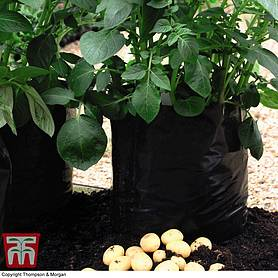 Black/Grey Potato Growing Bags