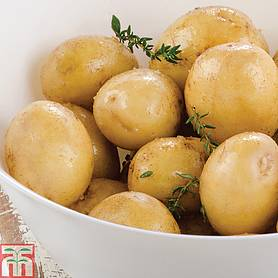 potato maris piper