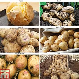 potato allotment favourites collection