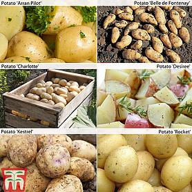 potato customer favourites collection