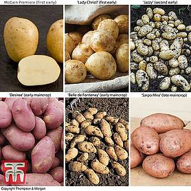 Potato 'Super Season of Spuds Collection'