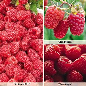 raspberry full season collection