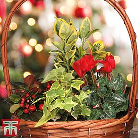 red christmas mixed planter  gift