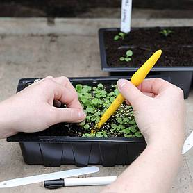 seed  seedling planting kit