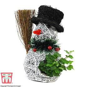 Snowman Planter' With Ivy - Gift
