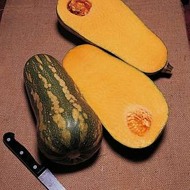 squash barbara butternut f hybrid winter