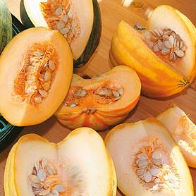 squash high sugar mixed f hybrid winter