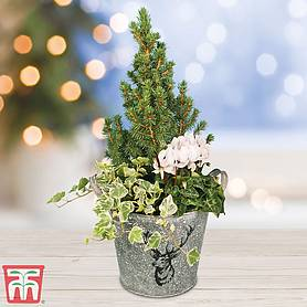 winter stag planter  gift