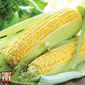 sweetcorn collection