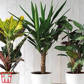 scandi houseplant trio in white plastic pots with drip feeders  gift