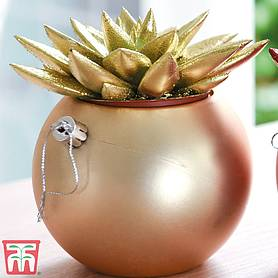 bauble succulent  gift