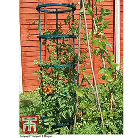 Tomato Growing Support