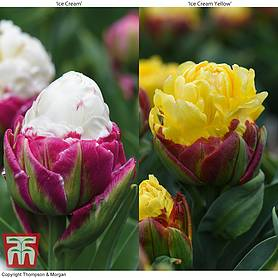 tulip ice cream duo
