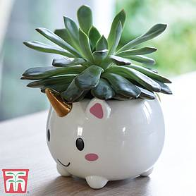 succulent  unicorn planter