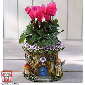 woodland fairy planter with cyclamen