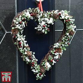 snowy buxus  berry heart christmas wreath  gift