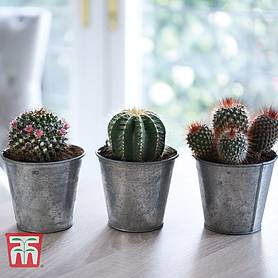 cactus mix house plant