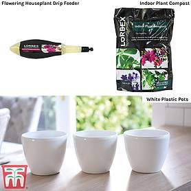 Flowering House Plant Potting Starter Pack