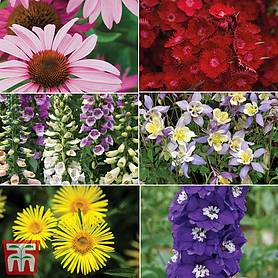 summer perennial collection