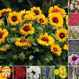 Nurseryman's Choice Perennial Collection