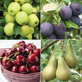favourite fruit tree collection