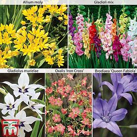 summer bulb collection
