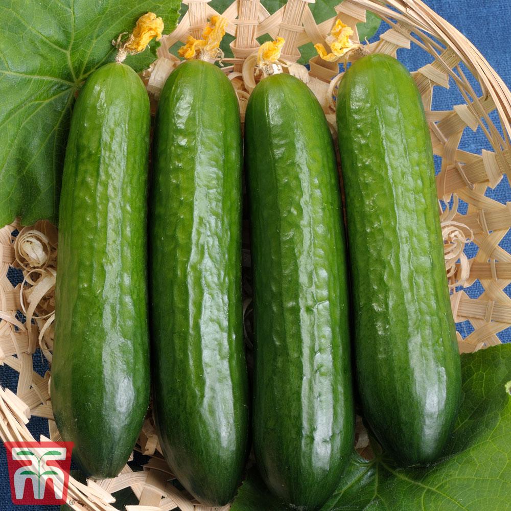 Image of Cucumber 'Merlin'