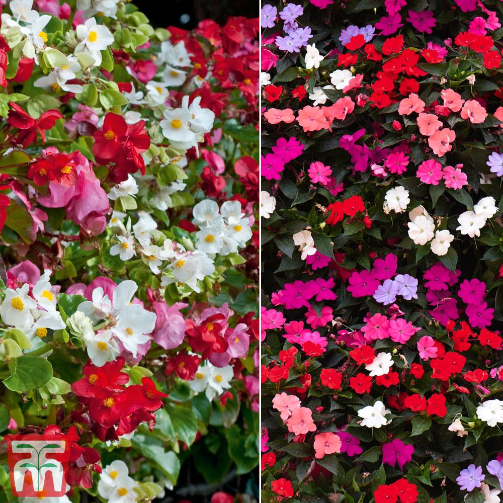 Image of Garden Ready Summer Colour Duo
