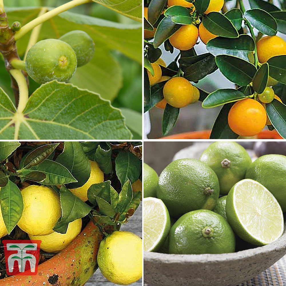 Image of Mediterranean Fruit Collection