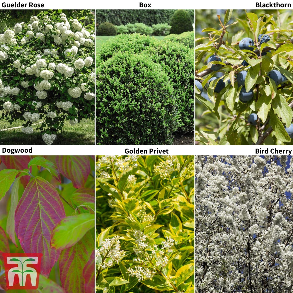 Image of Hedging Saver Collection