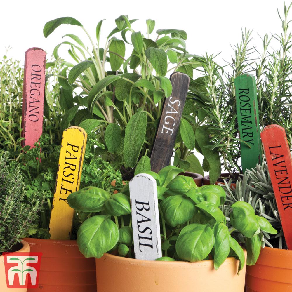 Image of Nurseryman's Choice Herb Collection