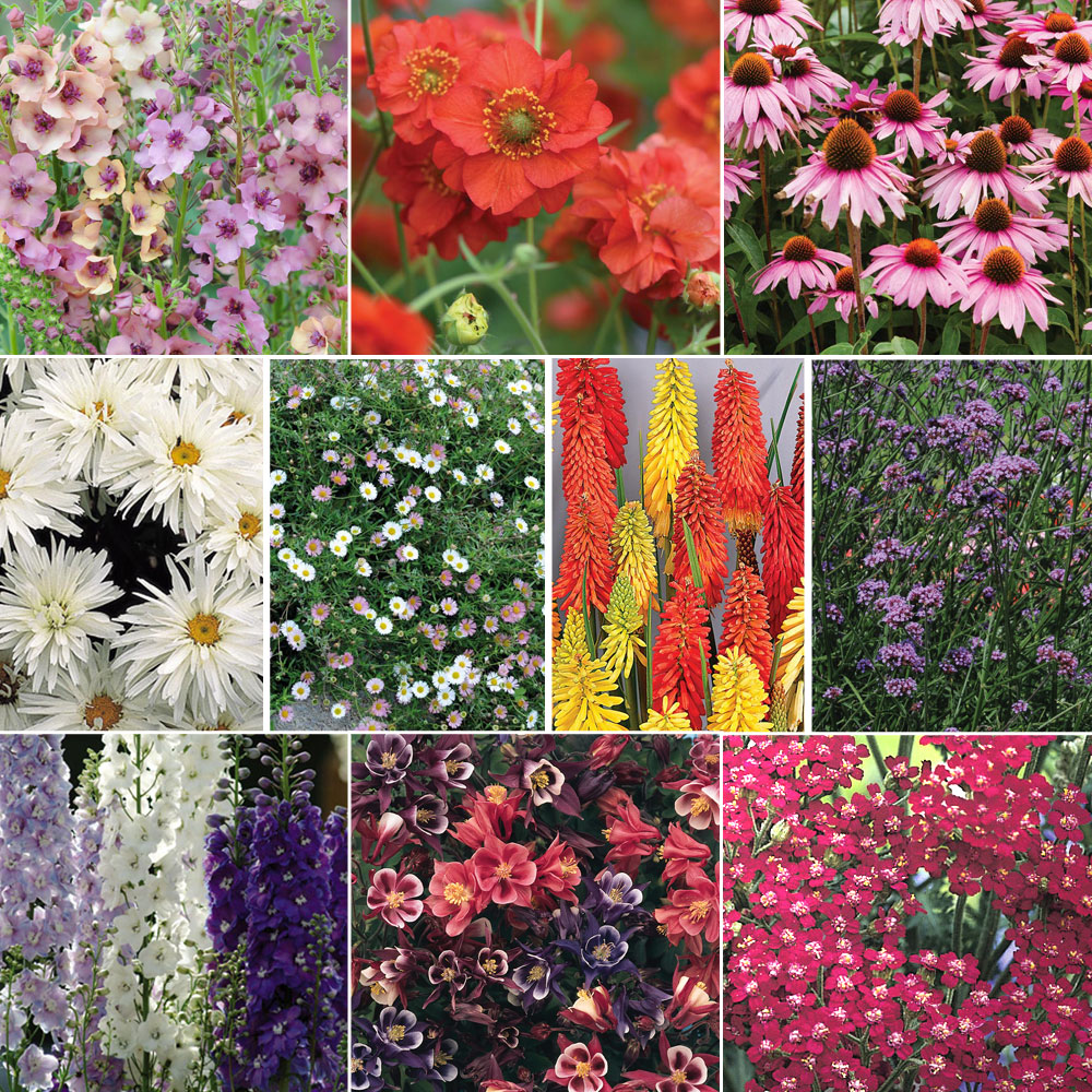 Image of 72 Perennial Collection