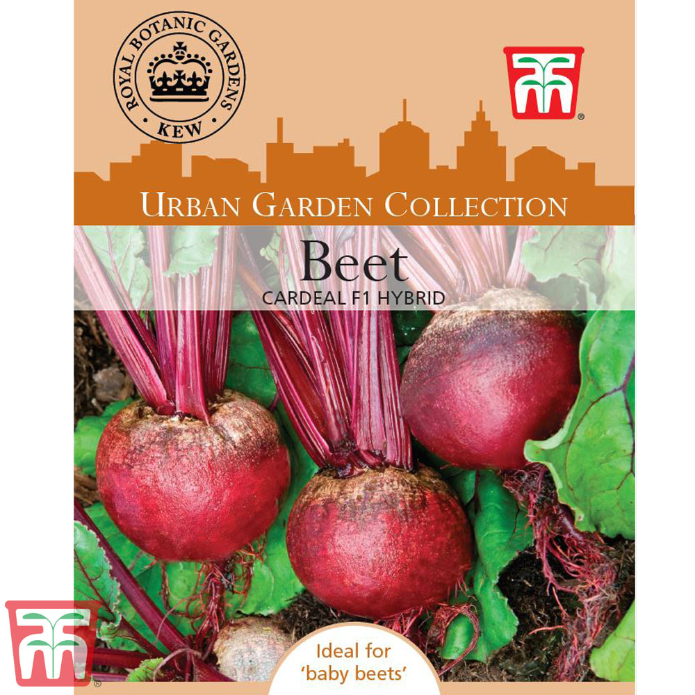 Image of Beetroot 'Cardeal' F1 Hybrid (Globe) - Kew Collection Seeds