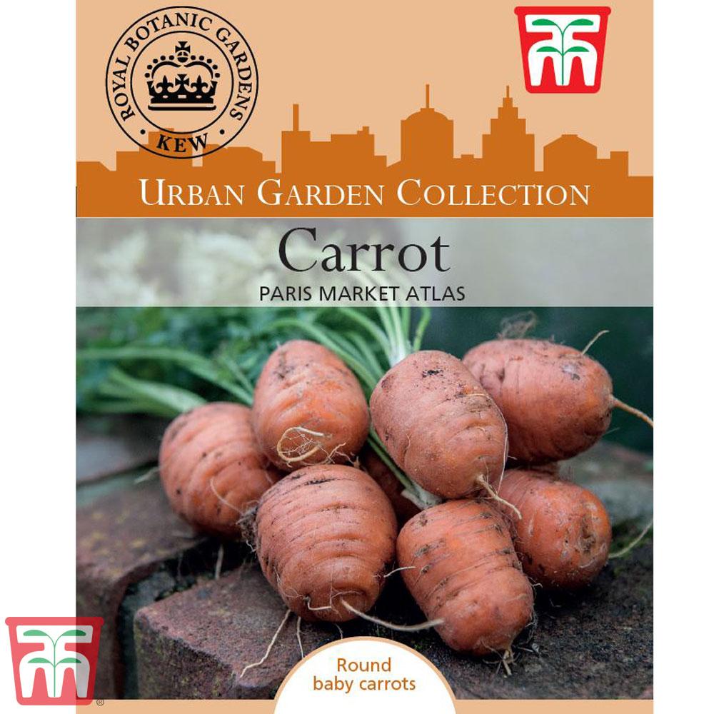 Image of Carrot 'Paris Market Atlas' - Kew Collection Seeds