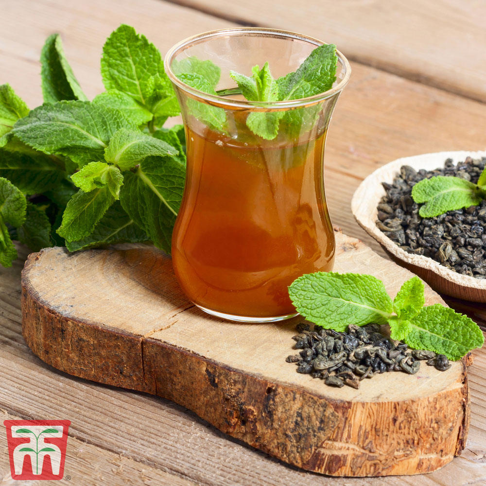 Image of Mint 'Moroccan'