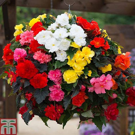 Best Container Flowers