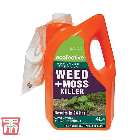 Ecofective Weed Moss Killer Ready To Use Thompson Morgan