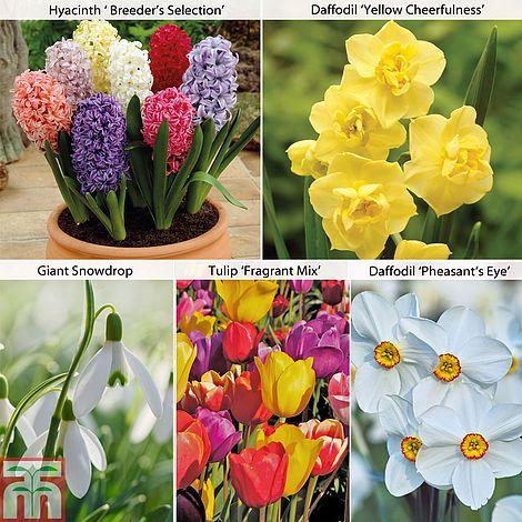 Fragrant spring bulb mix thompson morgan mightylinksfo