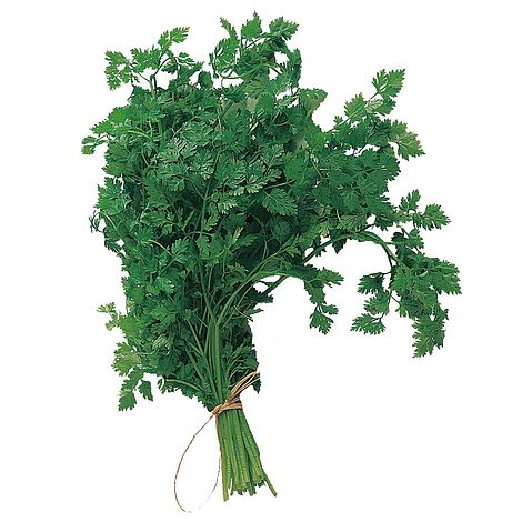 How Planting Chervil Seeds can Save You Time, Stress, and Money.