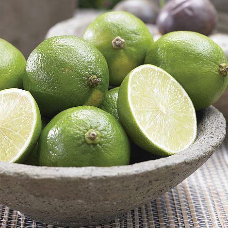FREE* Patio Lime Tree + Fruit Fertiliser! Worth £17.98 | Thompson U0026 Morgan
