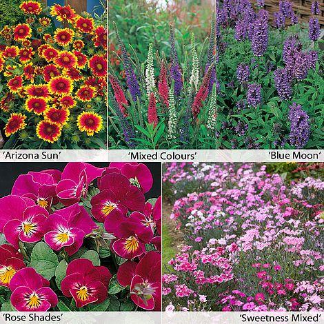 Perennial Flower Border Seed Collection Short Thompson Morgan