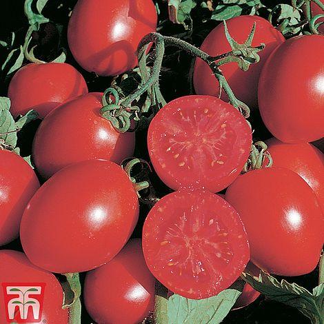 Thompson /& Morgan Tomato Falcorosso F1 Hybrid - 8 Seeds Organic