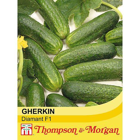 Gherkin 'Diamant' F1 HybridCucumis sativusRidge Cucumber