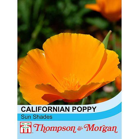 Californian Poppy Sun Shades Seeds