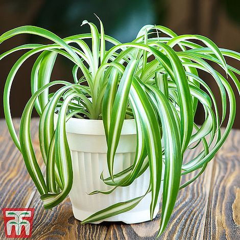 Air Purifying Plant Collection 3 Indoor House Plants 3 or 6 x 12cm Pots T/&M