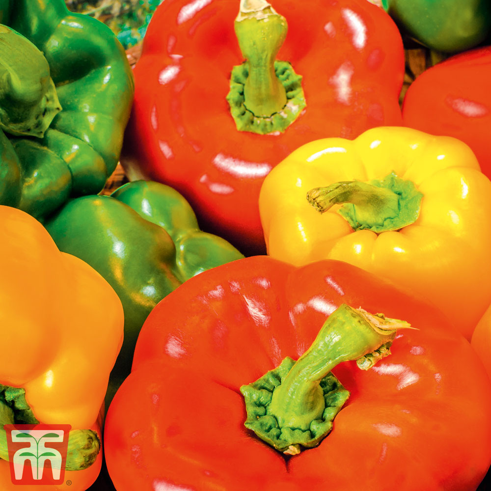 Image of Sweet Pepper Collection