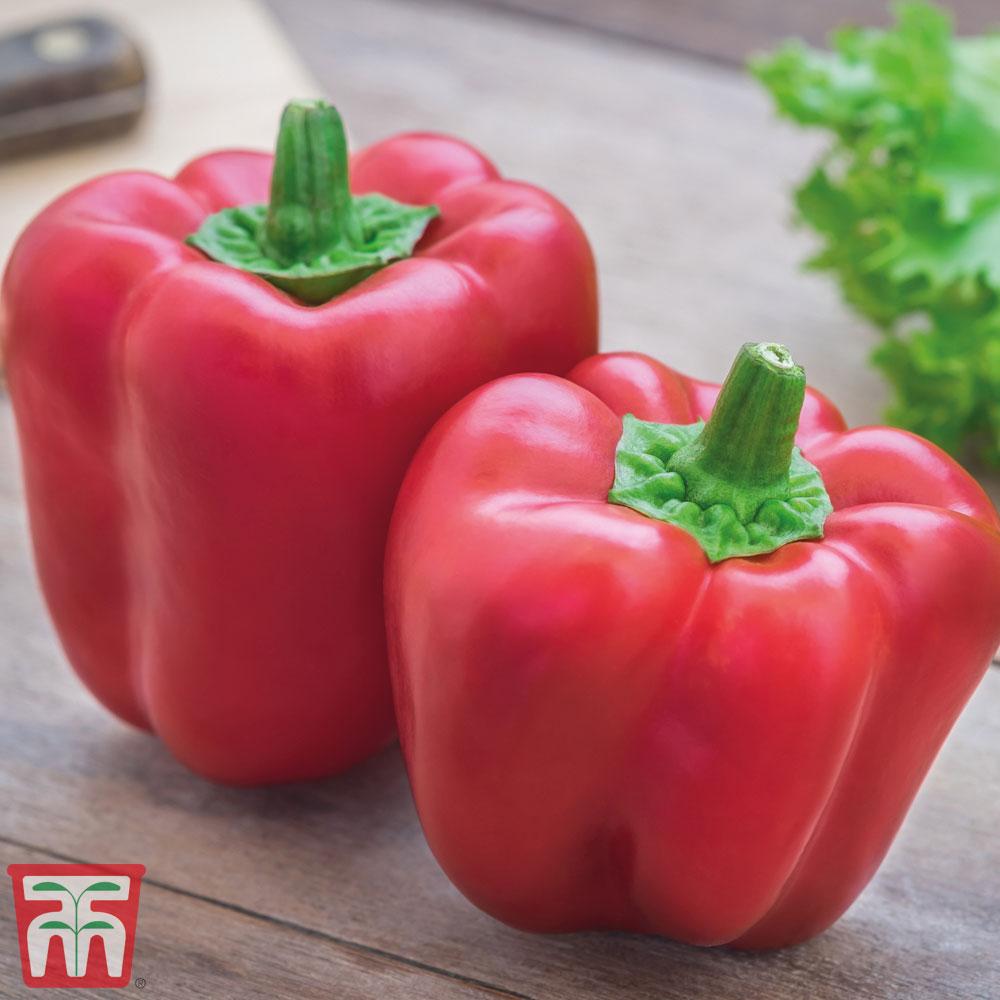 Image of Sweet Pepper 'Bontempi'