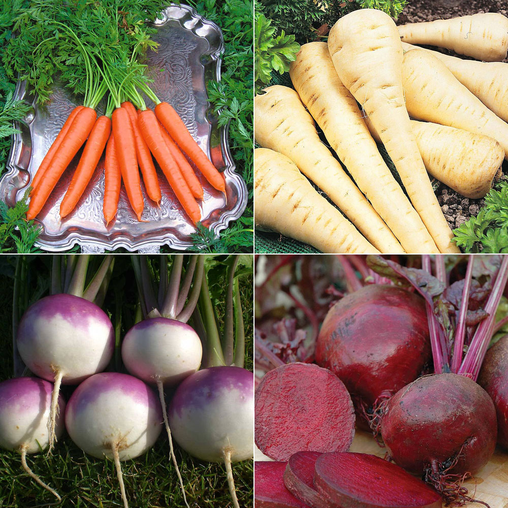 Image of Best Ever Root Veg Collection
